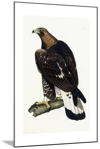A Young Golden Eagle, 1841-Prideaux John Selby-Mounted Giclee Print