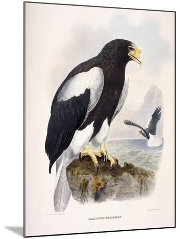 Haliaetus Pelagicus-Daniel Girard Elliot-Mounted Giclee Print