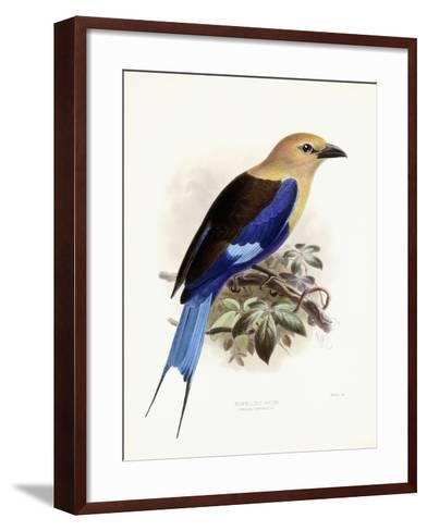 Bluebellied Roller, 1893-Johan Gerard Keulemans-Framed Art Print