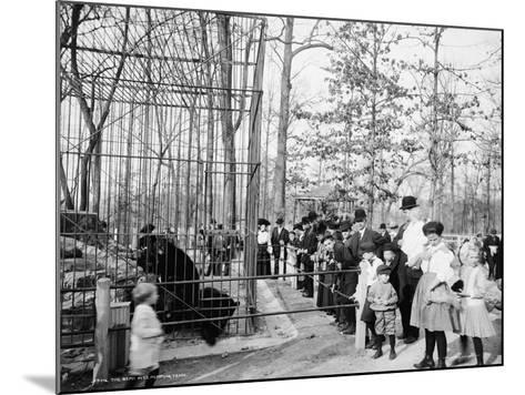 The Bear Pits, Memphis, Tennessee, C.1900-20--Mounted Photographic Print