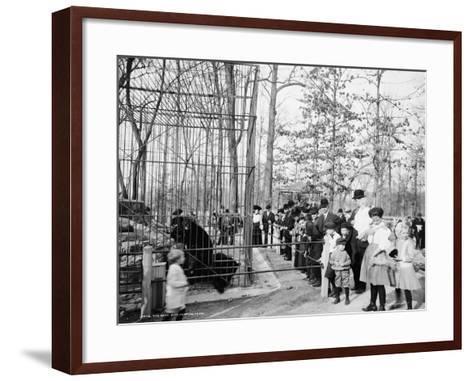 The Bear Pits, Memphis, Tennessee, C.1900-20--Framed Art Print