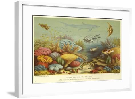 Coral Bank in the Red Sea--Framed Art Print