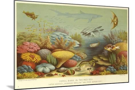 Coral Bank in the Red Sea--Mounted Giclee Print