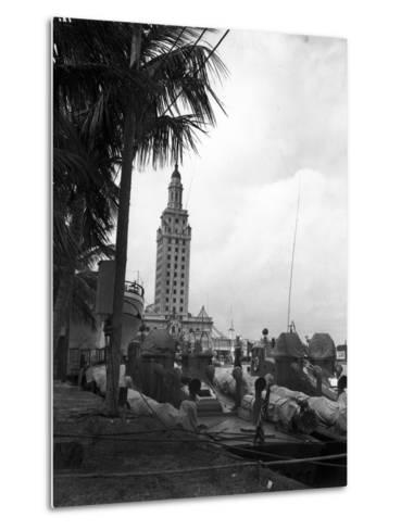 Pt Boats Docked at the Port of Miami--Metal Print
