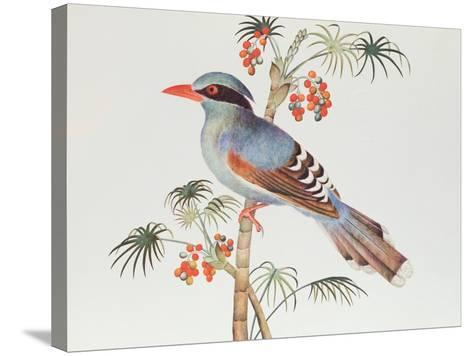 Green Magpie, Ch'Ien-Lung Period--Stretched Canvas Print