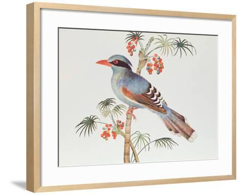 Green Magpie, Ch'Ien-Lung Period--Framed Art Print