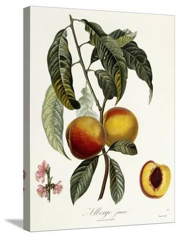 Alberge Jaune-Pierre Antoine Poiteau-Stretched Canvas Print