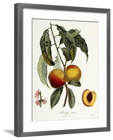 Alberge Jaune-Pierre Antoine Poiteau-Framed Art Print