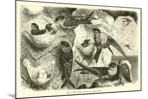 The Edible Swifts and their Nests--Mounted Giclee Print