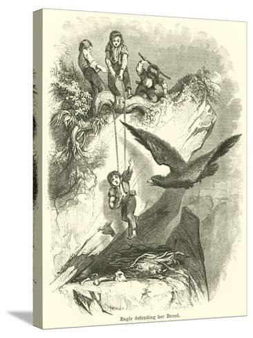 Eagle Defending Her Brood--Stretched Canvas Print