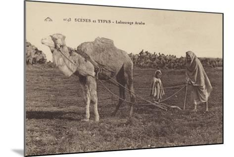 Scenes and Types - Arabic Ploughing--Mounted Photographic Print
