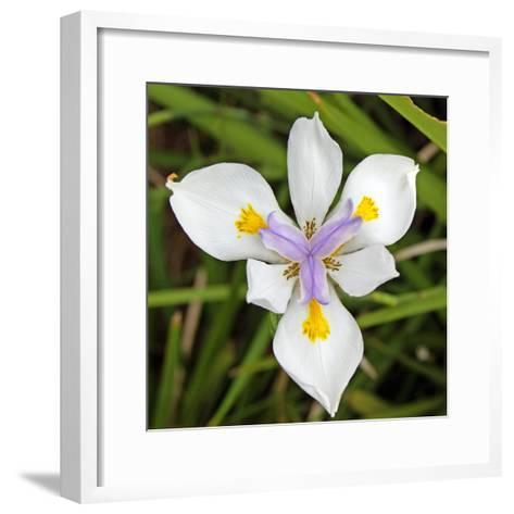 Close-Up of an Iris--Framed Art Print