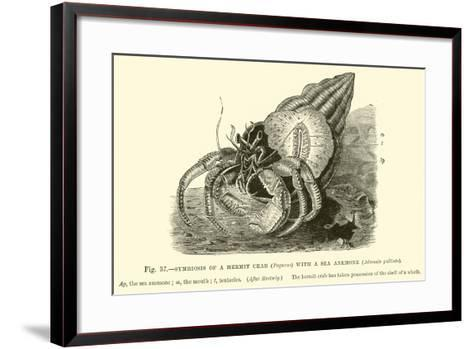 Symbiosis of a Hermit Crab--Framed Art Print