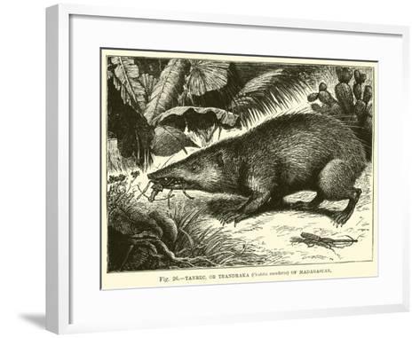 Tanrec, or Trandraka--Framed Art Print
