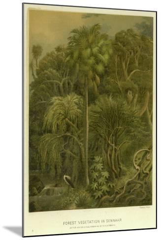 Forest Vegetation in Sennaar--Mounted Giclee Print