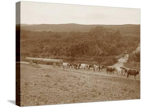 Bullock Team with a Log--Stretched Canvas Print