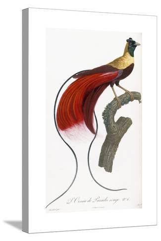 Red Bird of Paradise-Jacques Barraband-Stretched Canvas Print