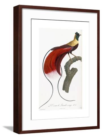 Red Bird of Paradise-Jacques Barraband-Framed Art Print