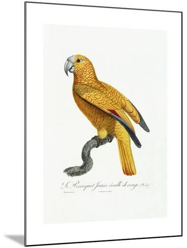 Yellow and Red Parrot, C.1801-05-Jacques Barraband-Mounted Giclee Print