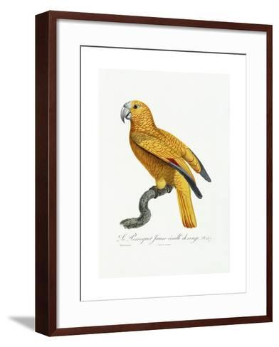Yellow and Red Parrot, C.1801-05-Jacques Barraband-Framed Art Print