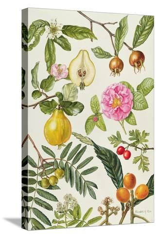 Quince and Other Fruit-Bearing Trees-Elizabeth Rice-Stretched Canvas Print
