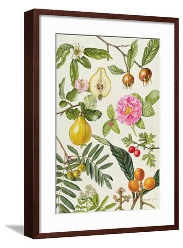 Quince and Other Fruit-Bearing Trees-Elizabeth Rice-Framed Art Print
