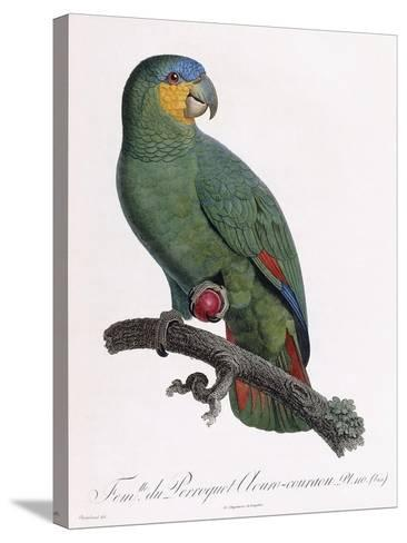 Female of the Douro-Couraou Parrot-Jacques Barraband-Stretched Canvas Print