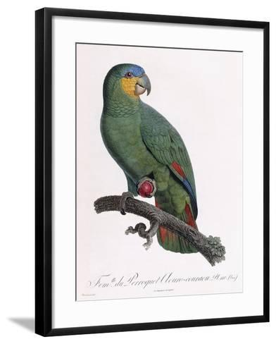 Female of the Douro-Couraou Parrot-Jacques Barraband-Framed Art Print