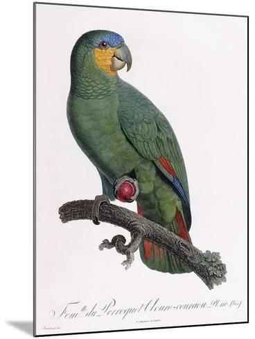 Female of the Douro-Couraou Parrot-Jacques Barraband-Mounted Giclee Print
