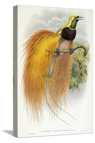 Paradisea Augustae Victoriae, 1891-1898-William Hart-Stretched Canvas Print