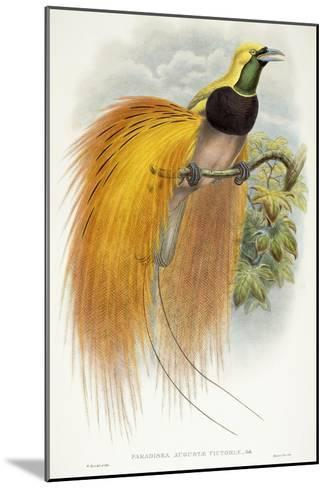Paradisea Augustae Victoriae, 1891-1898-William Hart-Mounted Giclee Print