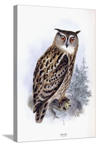 Eagle Owl-Johan Gerard Keulemans-Stretched Canvas Print
