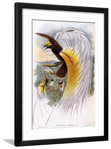 Paradisaea Minor--Framed Art Print
