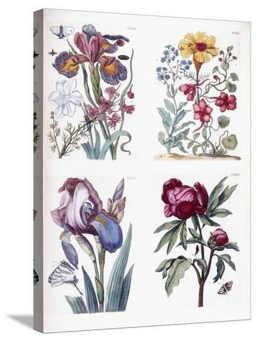 Various European Insects and Flowers-Maria Sibylla Graff Merian-Stretched Canvas Print