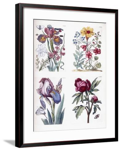 Various European Insects and Flowers-Maria Sibylla Graff Merian-Framed Art Print