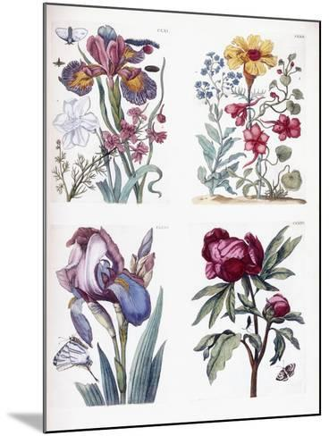 Various European Insects and Flowers-Maria Sibylla Graff Merian-Mounted Giclee Print