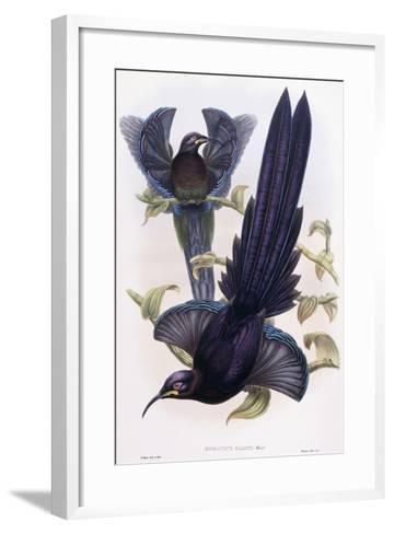 Epimachus Ellioti, Ward, C.1891-1898-William Hart-Framed Art Print