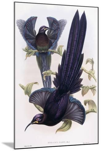 Epimachus Ellioti, Ward, C.1891-1898-William Hart-Mounted Giclee Print