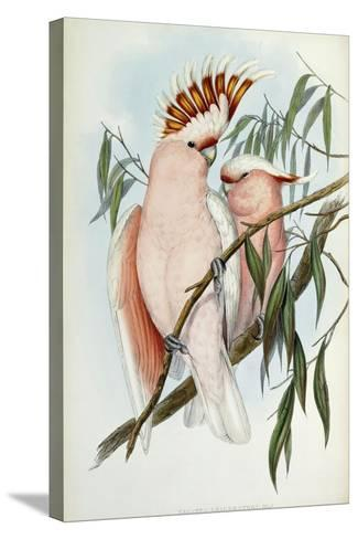 Cacatua Leadbeateri, 1848-1869-John Gould-Stretched Canvas Print