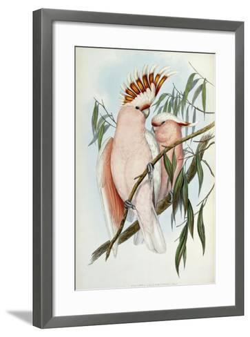 Cacatua Leadbeateri, 1848-1869-John Gould-Framed Art Print