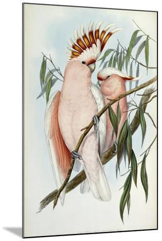 Cacatua Leadbeateri, 1848-1869-John Gould-Mounted Giclee Print
