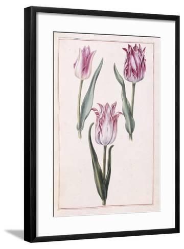 Tulips, 18th Century--Framed Art Print