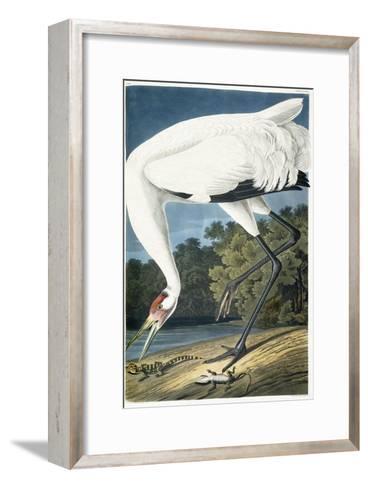 Whooping Crane, Adult Male, 1834-John James Audubon-Framed Art Print