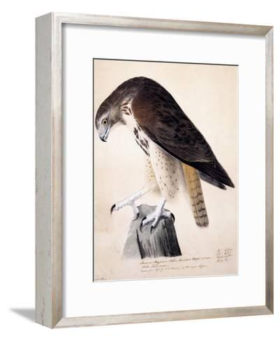 American Buzzard or White Breasted Hawk-John James Audubon-Framed Art Print