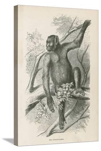 The Kooloo-Kamba--Stretched Canvas Print