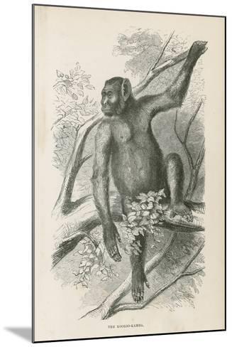 The Kooloo-Kamba--Mounted Giclee Print