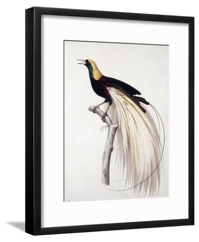 Greater Bird of Paradise, Male-Jacques Barraband-Framed Art Print