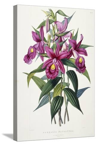 Sobralia Macrantha, C.1837-43-Sarah Ann Drake-Stretched Canvas Print