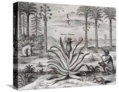 Athanasius Kircher-Athanasius Kircher-Stretched Canvas Print