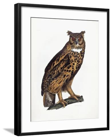 Great Eared Owl, 1841-Prideaux John Selby-Framed Art Print